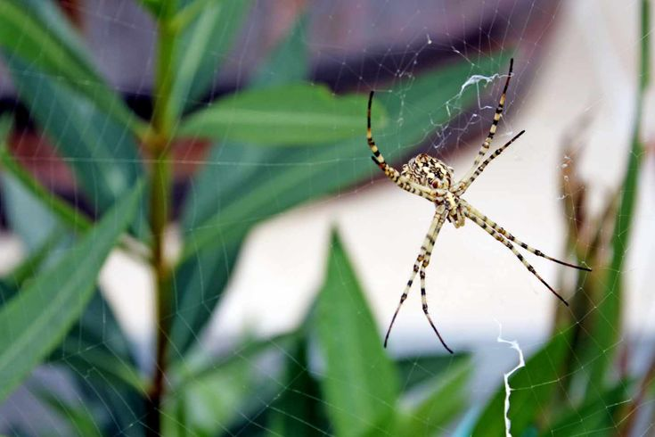 """Homemade """"Spider Spray"""" to the Rescue! 