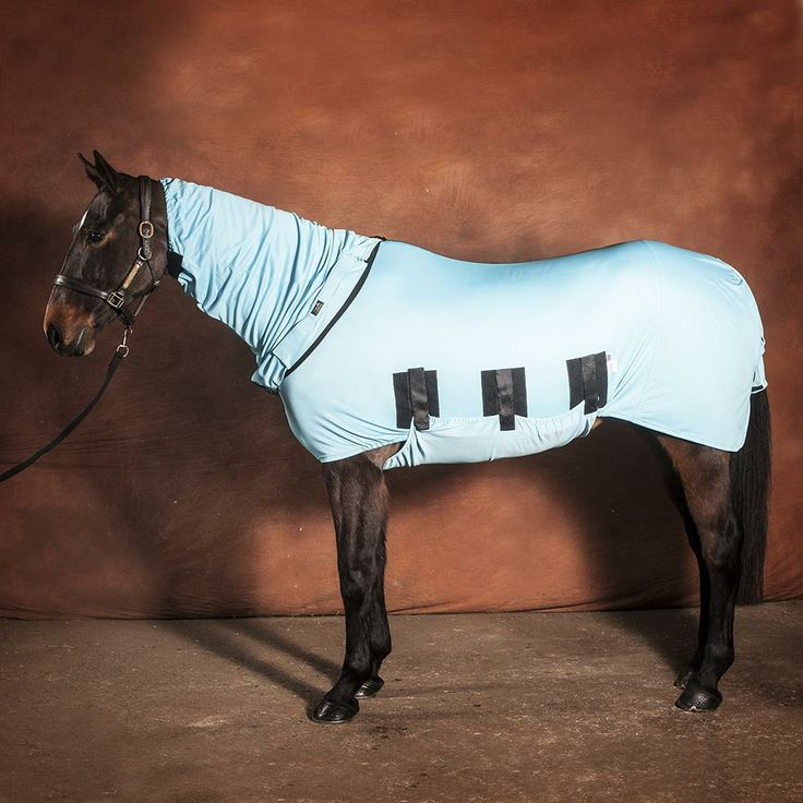 25+ Best Ideas About Horse Rugs On Pinterest