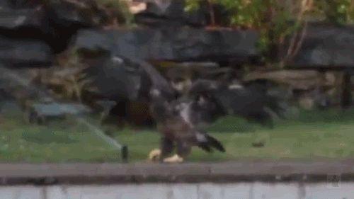 Bird Sprinkler.gif from 21 Best gifs of the week. Funny or Die