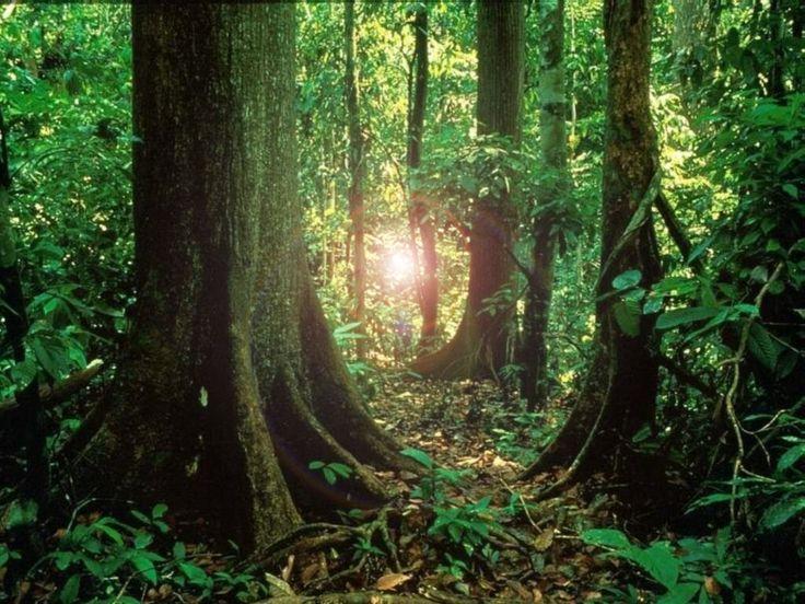 L'exposition à la lumière du soleil réduit les risques de cancer de l'oesophage   http://santecool.net/lexposition-a-la-lumiere-du-soleil-reduit-les-risques-de-cancer-de-loesophage/