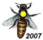 Om te weten in welk jaar een koningin is geboren merken we een koningin met een kleur op haar rug. Elk jaar een andere kleur. De te gebruiken kleuren zijn wit, geel, rood, groen en blauw. In 2010 w…