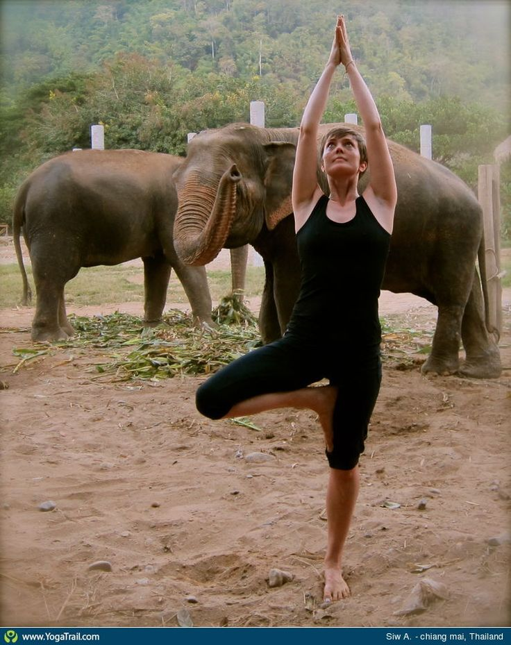 "Yoga Poses Around the World: ""Tree Pose with Elephants, in Chiang Mai, Thailand"""