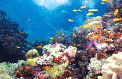 グレートバリアリーフには珊瑚礁と熱帯魚が気持ちよさそうにしている。ケアンズ 旅行・観光でおすすめのスポット!