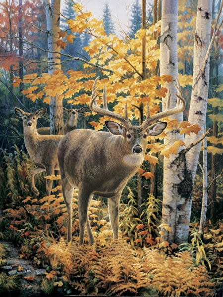 whitetail deer - Google Search