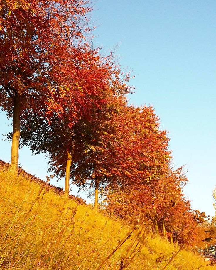 ROUEN #rouen #seinemaritime #rouentourisme #insta_normandy #igersrouen #seine_maritime_normandie #jaimemaville  #visitnormandy #visitlafrance #super_france  #ilovefrance #jaimelafrance #exclusive_france #arbre #arbres #nature #automne #herbst #fall #autumn #autunno #tree #couleursdautomne #perspective #rouge #orange #jaune #ceweekend