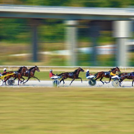I am a horse racing and sports trading professional and use my skills in these areas to create long-term winning services - horse betting #horsebettingtips