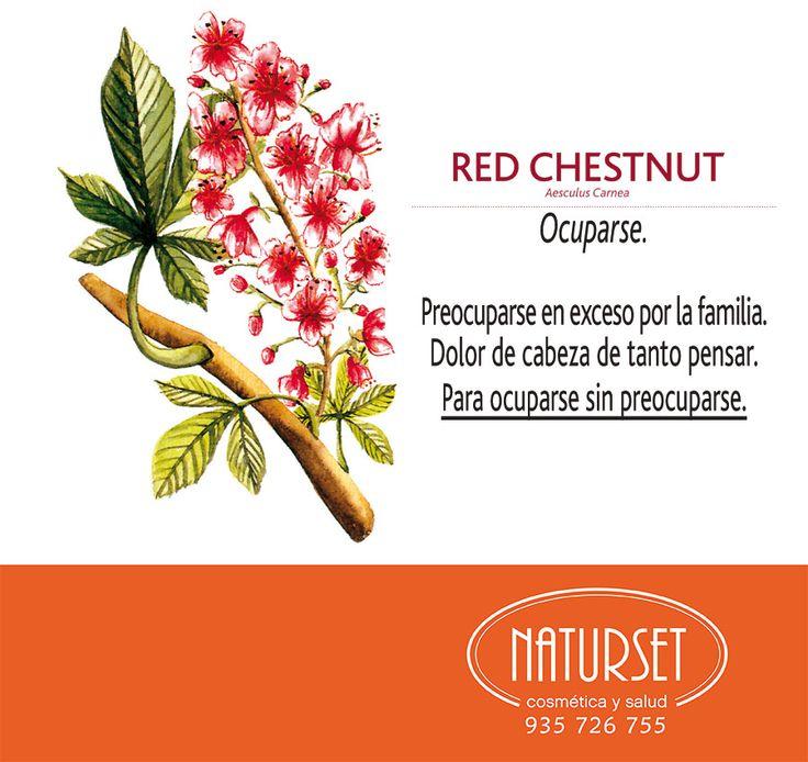 #Red-Chestnut #OCUPARSE. Preocuparse en exceso por la familia. Dolor de cabeza de tanto pensar. Para ocuparse sin preocuparse. #FloresdeBach de #Naturset