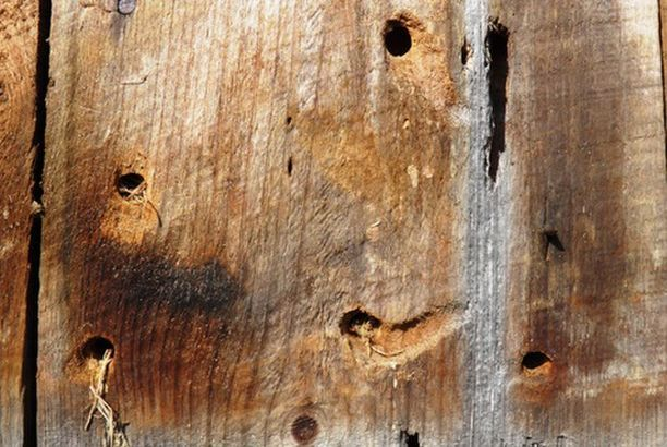 Homemade Wood Bees Killer Spray
