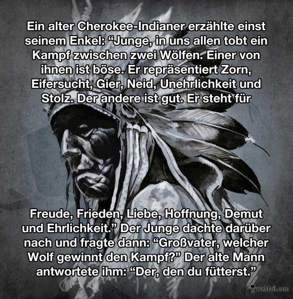 Zwei Wölfe – Win Bild