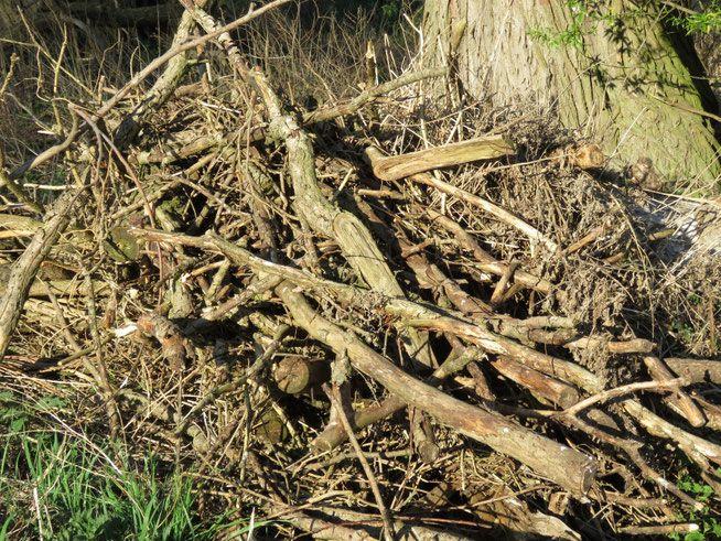 Lebensraum Totholz In 2020 Naturgarten Garten Blumen Wiese
