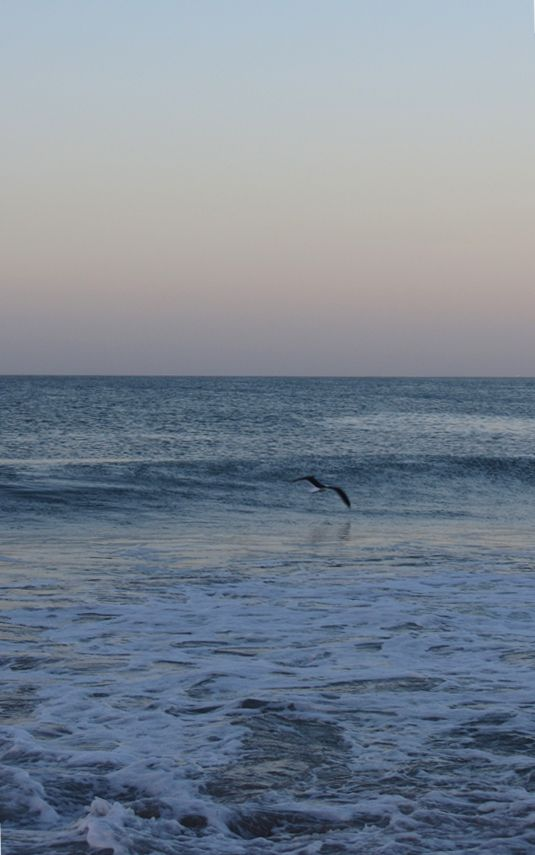 SKIM THE SWELL - It makes me smile to watch seagulls playfully gliding over ripe swells ~ it also makes me somewhat jealous!!!  http://www.absolutebeach.co.za/  #beachlife #seagulls #southafrica #twilight