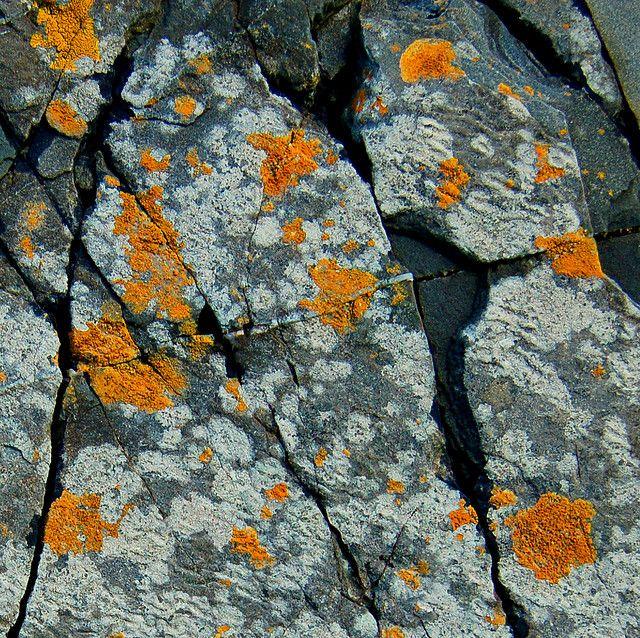 Lichen.  Pretty, pretty lichen    matte dark grey microglitter and sparser light grey glitters, with matte goldenrod yellow medium hex glitters