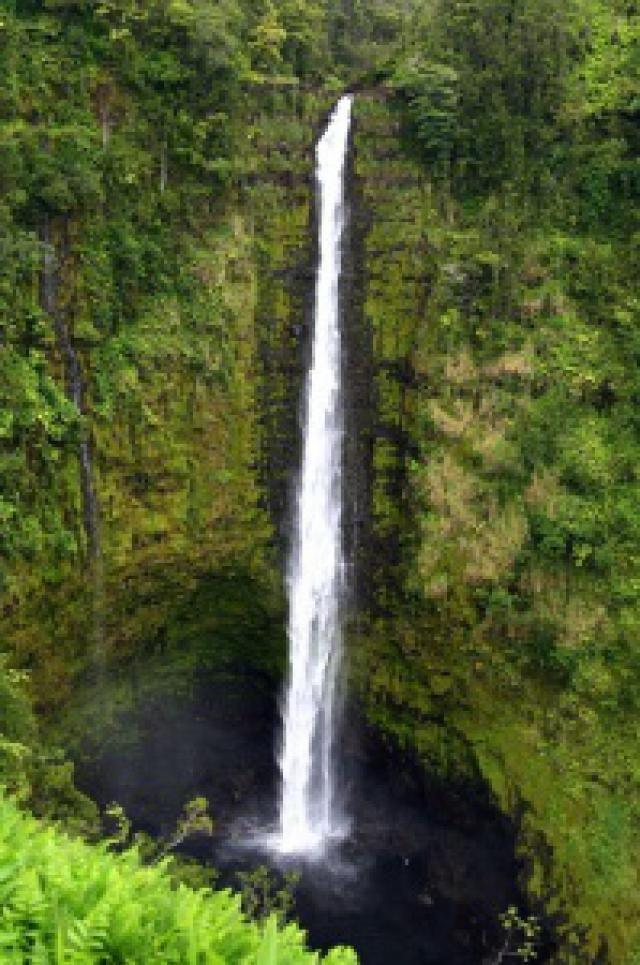 Things To Do For Free On Hawaii's Big Island: 'Akaka Falls State Park  This is the waterfall I grew up two miles away from.  My dad, june & I have been to the top.  The trails collasped now tho.  It wasnt much when we went, lol.  This is the view point for tourists.