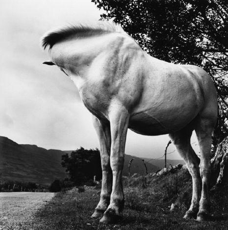 120618_yeats-1_p465.jpg: Art Moma, 1965 66, Extraordinary Art, Contemporary Photography, Hors B W, Miscellan Photography, White Horses, Hors Photography, Alen Macweeney