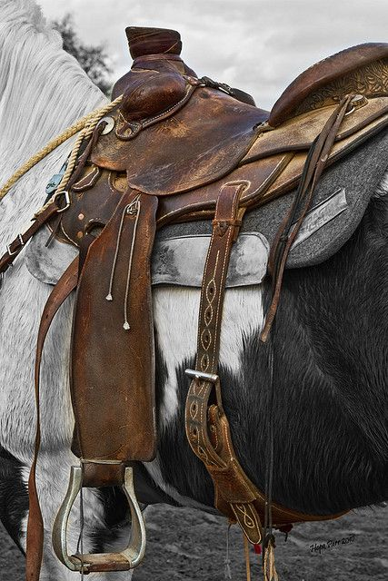 Western Saddle by Hope Parr