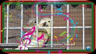 Φίλες και φίλοι γεια σας, σε αυτή την ανάρτηση θα δούμε  Κώδικας τραγουδιού καναρινιού φωνής Timbrado κατά F.O.E. Το ρεπερτόριο του Ισπανικού τιμπράδο αποτελείται απο δώδεκα νότες Κατά την αξιολόγηση των νοτών πρέπει να έχουμε κατά νου ότι ισχύει η παρακάτω σειρά αξιολόγησης:  1. Η ποιότητα  2. Η ποικιλία 3. Η ποσότητα  ( Ακουστε τις νότες )