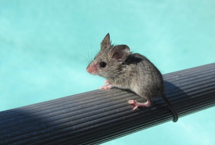 The mousy rescue - this poor lil guy fell in the pool and we had to play lifeguard :)