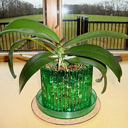 Orchitop® Carousel Orchid Pots