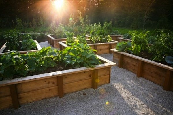 10 steps to a productive, organic veggie patch in 60 days or lessGardens Ideas, Gardens Boxes, Raised Gardens, Raised Beds, Vegetables Gardens, Rai Gardens Beds, Planters Boxes, Rai Beds, Beds Design