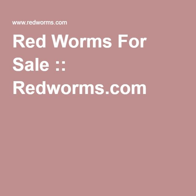 Red Worms For Sale :: Redworms.com