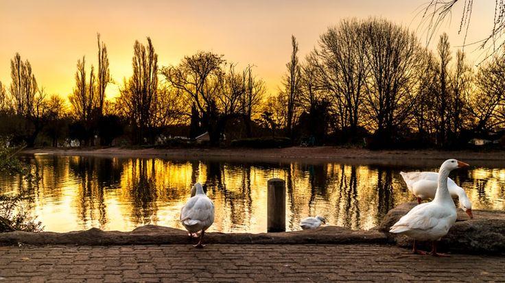 Ducks on zoo lake by Dereje Belachew - Photo 47255698 / 500px
