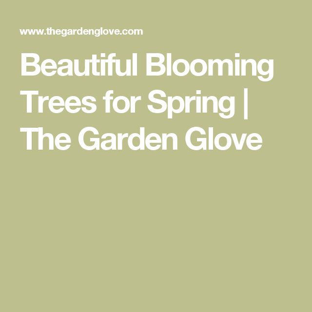 Beautiful Blooming Trees for Spring | The Garden Glove