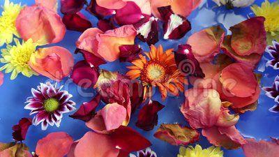 Various flower petals floating on water.
