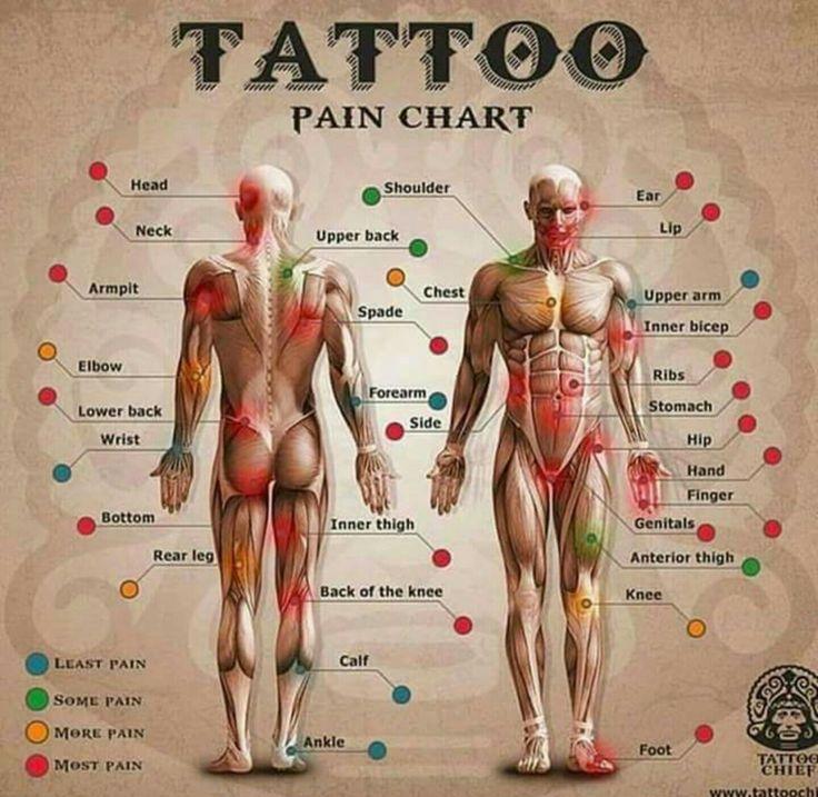 Tattoo pain chart                                                                                                                                                                                 More