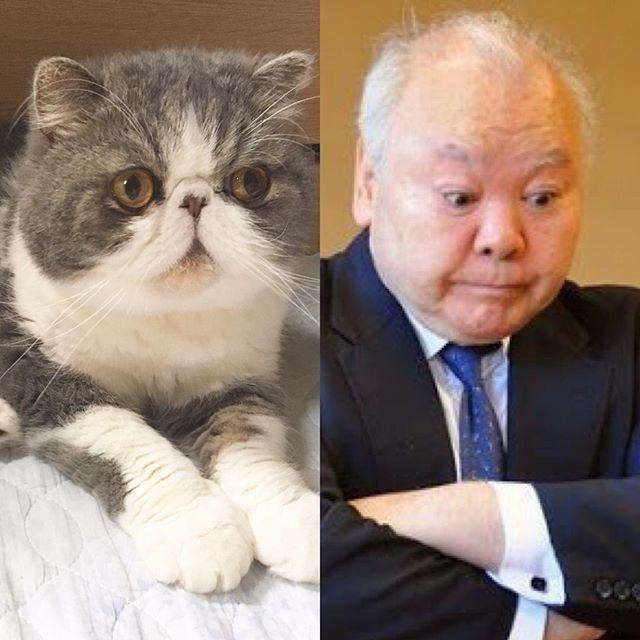exotic_toshi ひふみん ムスカ cats cat pets pet cute catloversclub 猫  エキゾチックショートヘア exoticshorthair cat_features catsofInstagram