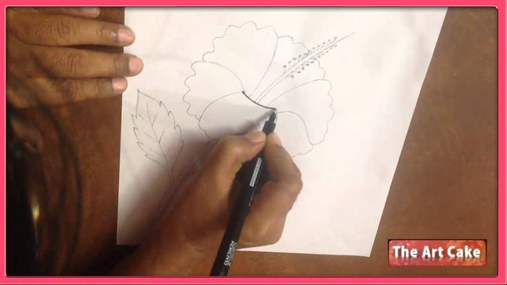 Hibiscus Flower Drawing - How to Draw Hibiscus Flower - Easy Flower Draw...