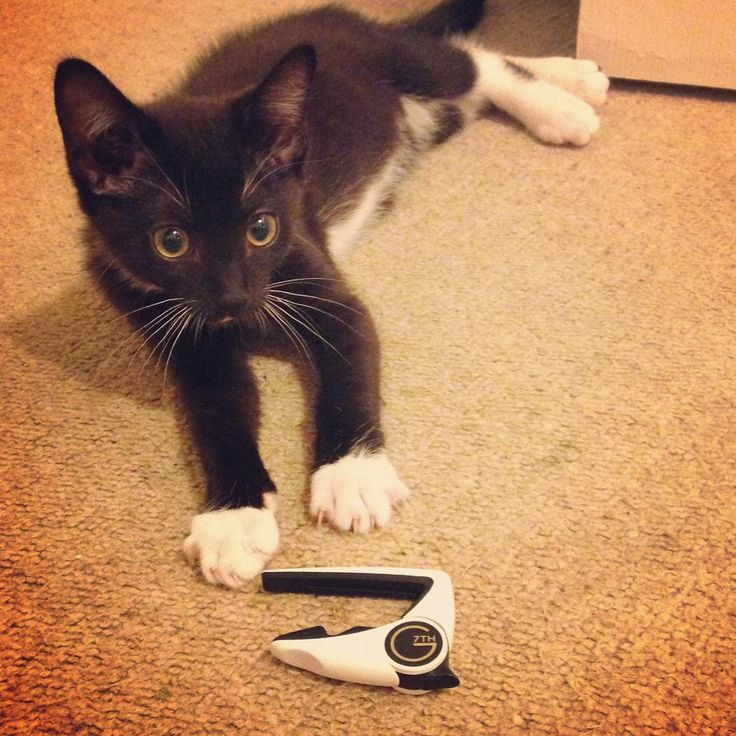 Oddly, no one seems to be using this hashtag, despite the popularity of cats & kittens on the Internet #CatsWithCapos