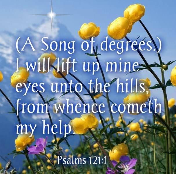 Psalms 1211 Alpine flowers, Perennial plants, Beautiful