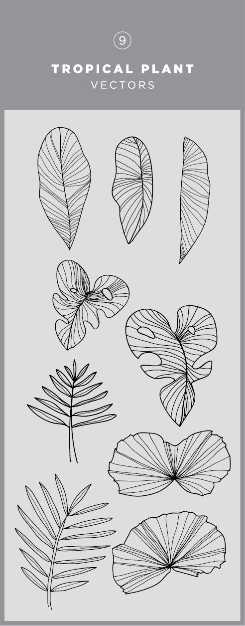 Illustrated tropical plant vector graphic