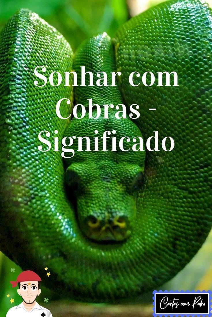 Sonhar Com Cobras Significado Sonhar Com Cobras Cobras Leao