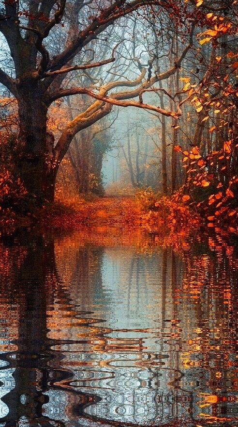 Autumn reflections...