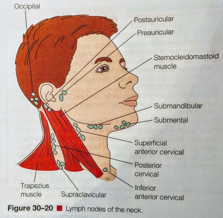 Lymph node anatomy neck