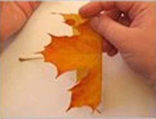Поделки. Осенний букет. Осенние поделки своими руками из осенних листьев. Букет из листьев клена. Шаг 1