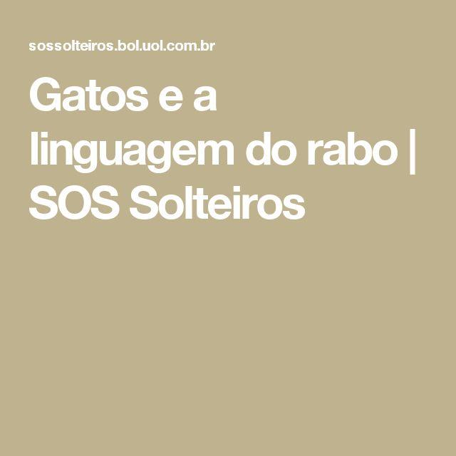 Gatos e a linguagem do rabo | SOS Solteiros