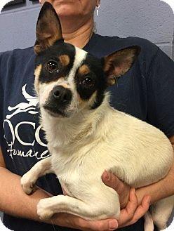 Dog Cassie Adoption Maryland