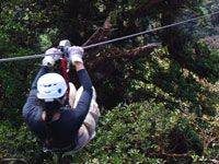 Monteverde canopy tour - 2 different companies' tour styles and options  $45-71 per person