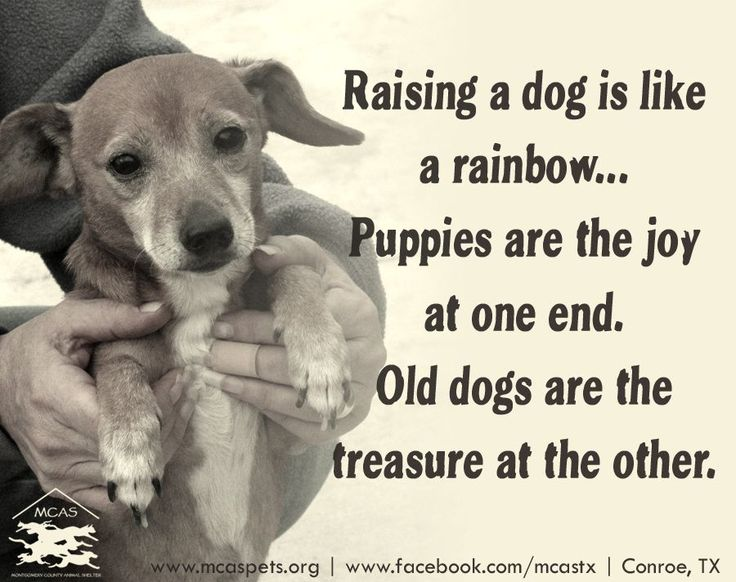 Raising a dog is like a rainbow... Puppies are the joy at one end. Old dogs are the treasure at the other.