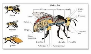Anatomy of a bee chart