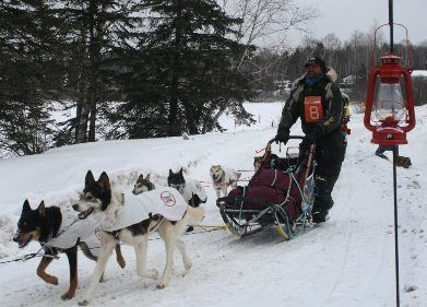 Kearney Dog Sled Races Website  Exciting finish of the 120m race in Kearney Ontario