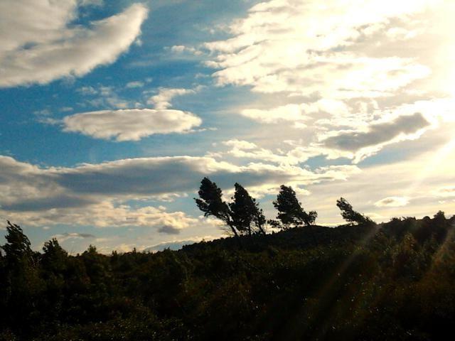Les pins de Pédros en mars 2014