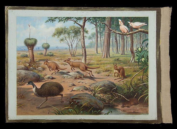 Uit de #Australische #dierenwereld | #Schoolplaat #Koekkoek