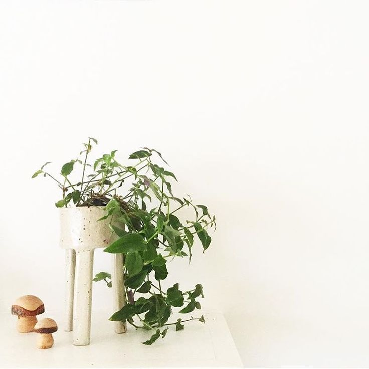 Regram of one of my three legged planters owned by the lovely Emma of @the_plantroom Such a great shot!!