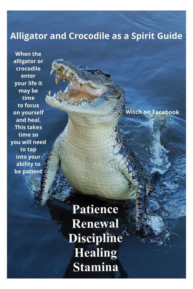 °Crocodile/Alligator as a Spirit Guide                                                                                                                                                                                 More