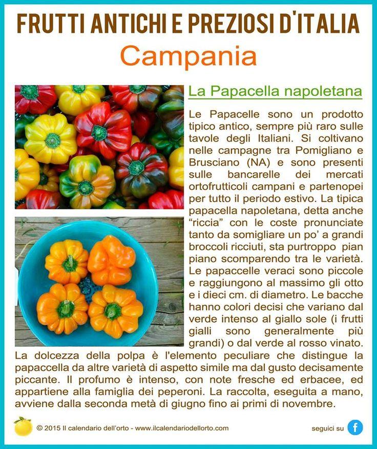 Campania: La Papacella napoletana