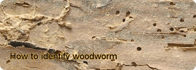 #Woodworm flight holes and associated Frass that has emerged from the holes.  Learn more about the tell tale signs of woodworm by visiting http://www.wisepropertycare.com/woodworm/what-is-woodworm/identify/  #identifywoodworm