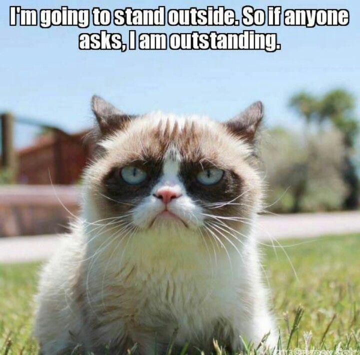 That's outstanding, Grumpy cat!